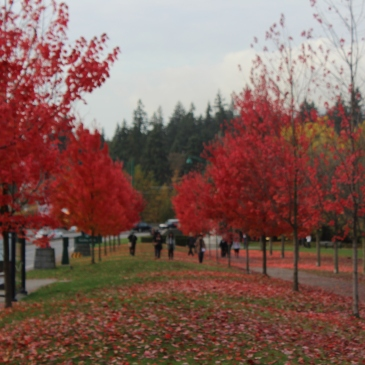 Atrações turísticas de Vancouver